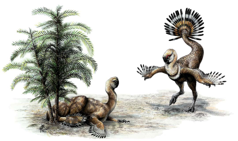 Ajancingenia reconstruction