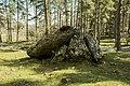 Albi trikuharria-11.jpg