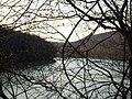 Allegheny Tangle - panoramio.jpg