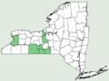 Allium cernuum var cernuum NY-dist-map.png