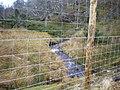 Allt Phris behind New Forestry Fencing - geograph.org.uk - 1242285.jpg