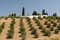 Almonds plantation and farm, Alhama de Granada, Andalusia, Spain.jpg