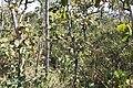 Alto Araguaia - State of Mato Grosso, Brazil - panoramio (506).jpg