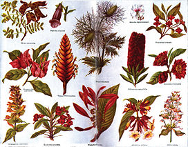Americana 1920 Plants Ornamental.jpg
