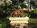 Amin al-Islami Park - Trees and Flowers - Nishapur 042.JPG