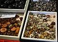 Ammonite shells (4715541301).jpg