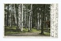 Among the Birches, Green Island, Lake George, N. Y (NYPL b12647398-67741).tiff