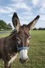 An adorable donkey in a field in Bonham, Fannin County, Texas LCCN2014632725.tif