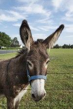List Of Donkey Breeds Wikipedia