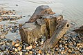 An oak foundation pile of the Royal Suspension Chain Pier Brighton exposed at very low tide.jpg
