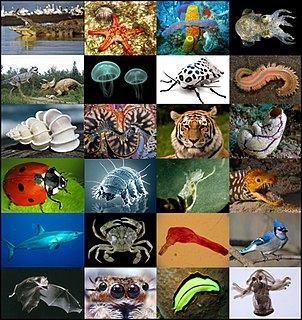 Animal Kingdom of motile multicellular eukaryotic heterotrophic organisms