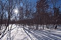Animal tracks in the snow - Winter at Wild River State Park, Minnesota (24966185907).jpg