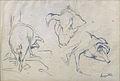 Anquetin L. - Pencil - Etude de cochons (dos, face, profil) - feuille 25x36cm.jpg