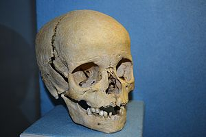 English: Anthroplogy - human skull of a boy. T...