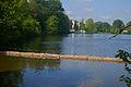 Antialg in vijver Zoet Water Oud-Heverlee B.jpg