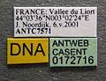 Aphaenogaster subterranea casent0172716 label 1.jpg