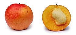 Apple mango and cross section.jpg