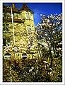 April Magnolia grandiflora Freiburg Botanischer Garten - Master Botany Photography 2013 - panoramio.jpg