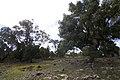 Apsley NSW 2820, Australia - panoramio (39).jpg