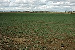 File:Arable land near Wormington - geograph.org.uk - 1776557.jpg