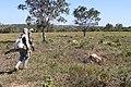 Araguainha - State of Mato Grosso, Brazil - panoramio (1103).jpg