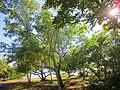Arboles del Bulevard, Chetumal, Q. Roo - panoramio.jpg