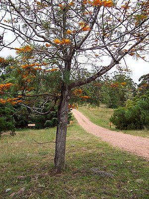 Lussich Arboretum - Arboretum Lussich