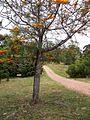 Arboretum Lussich 01.jpg