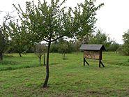 Arboretum Main Taunus Streuobstwiese