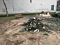 Arbre coupé à l'intersection de la Montée de la Paroche et de la rue des Andrés à Saint-Maurice-de-Beynost (Ain, France) - 1.JPG