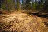 Arena Pines and Sand Barrens.jpg