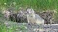 Assiniboine Park Zoo, Winnipeg (480467) (9444992509).jpg