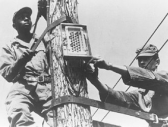 Francis E. Warren Air Force Base - These student repairmen install a terminal box atop a telephone pole. This is an example of the practical training received in the ATC installer repairman phase of the fixed wire communications course at Francis E. Warren AFB