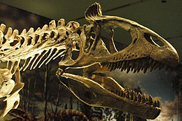 August 1, 2012 - Close-up of a Cryolophosaurus on Display at the Royal Ontario Museum.jpg