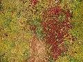 Autumn Moss - geograph.org.uk - 588824.jpg