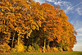 Autumn in Dörflingen.JPG