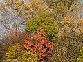 Autumn in Hoofddorp pic2.JPG