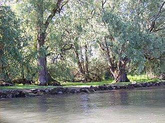 Budenheim - Floodplain forest near Budenheim (conservation area)
