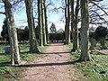Avenue of Trees - geograph.org.uk - 358501.jpg