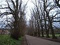 Avenue of trees, Gifford - geograph.org.uk - 1245651.jpg