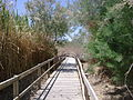 Azraq marsh trail.jpg
