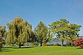 Bäume an der Promenade von Bodman am Bodensee (9469388476).jpg