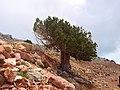 Babadag - panoramio (1).jpg