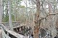 Bald Cypress Trail First Landing State Park-boardwalk-spanish moss-2 (33051849702).jpg