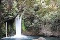 Banias river (4).jpg