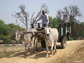 Bara Banki district, Uttar Pradesh, India