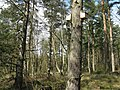 Bat boxes in Devilla Forest - geograph.org.uk - 1236369.jpg