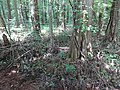 Battle Creek Cypress Swamp 19.jpg