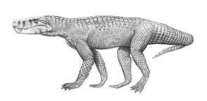 Lebendrekonstruktion von Baurusuchus albertoi