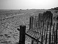 Beach @ Saltaire, Fire Island.jpg